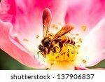 Bee  And Carpel Rose At  Tha...