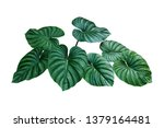 Heart shaped bicolors leaves of ...