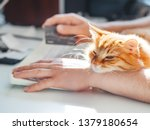 Stock photo man is typing at the computer keyboard and holding creadit card in hand cute ginger cat dozing on 1379180654
