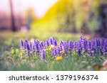 closeup ecology nature... | Shutterstock . vector #1379196374