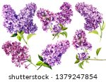Set Of Lilac Flowers On An...