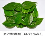 piper betle on white background   Shutterstock . vector #1379476214