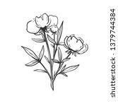 beautiful hand drawn peony... | Shutterstock .eps vector #1379744384