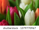 tulip flower close up  with... | Shutterstock . vector #1379770967