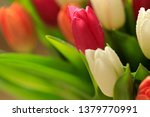 tulip flower close up  with... | Shutterstock . vector #1379770991
