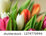 tulip flower close up  with... | Shutterstock . vector #1379770994