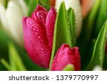 tulip flower close up  with... | Shutterstock . vector #1379770997
