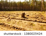 stump in the middle of felled... | Shutterstock . vector #1380025424