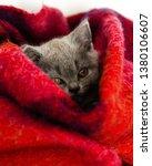 Stock photo gray kitten sleeps in a bright wool blanket 1380106607