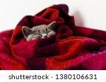 Stock photo gray kitten sleeps in a bright wool blanket 1380106631