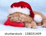 Little Cat Wearing Santa's Hat...