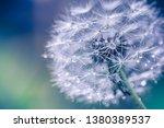 Macro Image Of Dandelions With...
