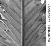 vegetation virgin of the... | Shutterstock . vector #1380640097