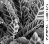 vegetation virgin of the... | Shutterstock . vector #1380641141