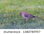 horizontal photo with male... | Shutterstock . vector #1380785957