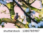 horizontal photo with male... | Shutterstock . vector #1380785987