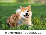 Stock photo dog and cat in a grass russia 138083729