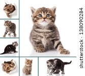 Stock photo kitten isolated on white background cat collection 138090284