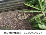 Stock photo african leopard tortoise george c mcgough nature park the african spurred tortoise also called 1380914327