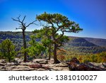Pine tree growing out of the rocks on top of Sam