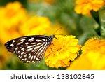 Butterfly On Yellow Flower In...
