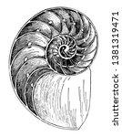 nautilus shell is a pelagic...   Shutterstock .eps vector #1381319471