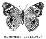 J Coenia Butterfly Which Commo...
