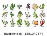 herbs. spices. italian herb... | Shutterstock .eps vector #1381347674