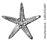 the common starfish is a five... | Shutterstock .eps vector #1381552487