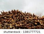 felled trees stacked.... | Shutterstock . vector #1381777721