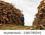 worker chooses a log. felled... | Shutterstock . vector #1381780241