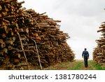 worker chooses a log. felled... | Shutterstock . vector #1381780244