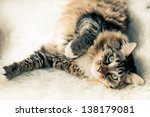 Stock photo grey cat lying on bed 138179081