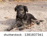 close up of dog playing and... | Shutterstock . vector #1381837361