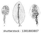 this illustration represents... | Shutterstock .eps vector #1381883807
