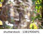 bird birdwatching wild wildlife ... | Shutterstock . vector #1381900691