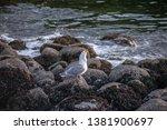 seagull flight beach ast close... | Shutterstock . vector #1381900697