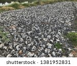 dry sediment of biogas... | Shutterstock . vector #1381952831