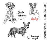 Dogs Breeds Vector Set....