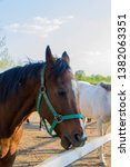 horse. the herd of horses...   Shutterstock . vector #1382063351