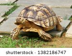 Stock photo an african spurred tortoise walks on the ground april 1382186747