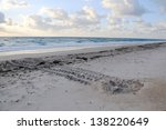 Sea Turtle Nest On The Beach...