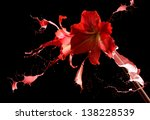 red flower and paint splashes.   Shutterstock . vector #138228539