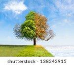 Four Seasons Tree Time Passing...