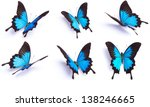 Blue Butterfly  Papilio Ulysse...