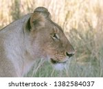 Close Up Profile View Of A...