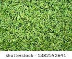 the horizontal natured green... | Shutterstock . vector #1382592641
