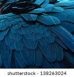 parrot .close up of blue macaw... | Shutterstock . vector #138263024