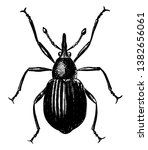 seed weevil is a beetle in the...   Shutterstock .eps vector #1382656061