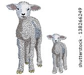 baby lamb isolated in a... | Shutterstock .eps vector #138266249
